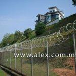 alex.com.my razor wire roll type (4)